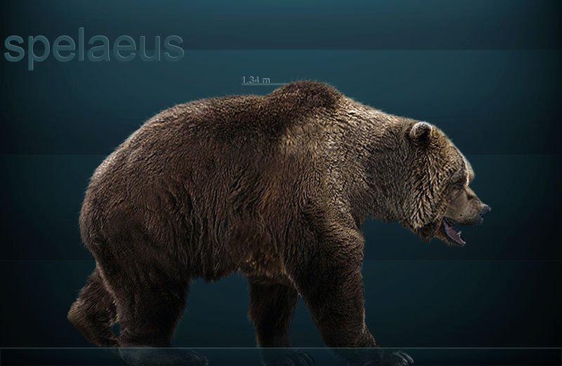 Bear Dire D20pfsrd